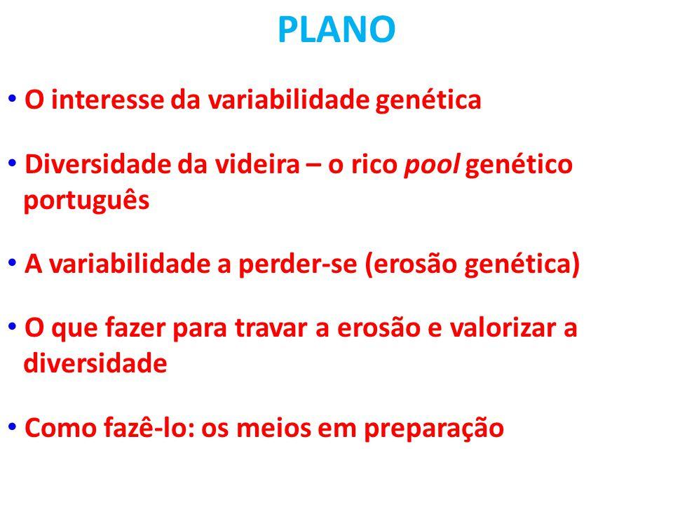PLANO • O interesse da variabilidade genética • Diversidade da videira – o rico pool genético oportuguês • A variabilidade a perder-se (erosão genética) • O que fazer para travar a erosão e valorizar a odiversidade • Como fazê-lo: os meios em preparação