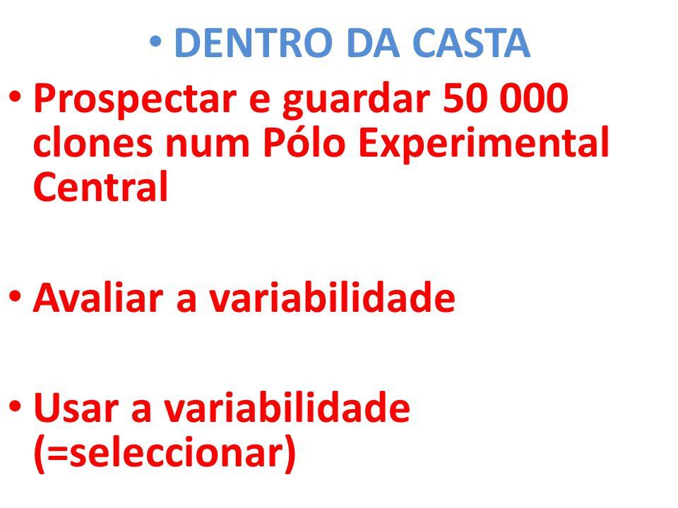 • DENTRO DA CASTA • Prospectar e guardar 50 000 clones num Pólo Experimental Central • Avaliar a variabilidade • Usar a variabilidade (=seleccionar)