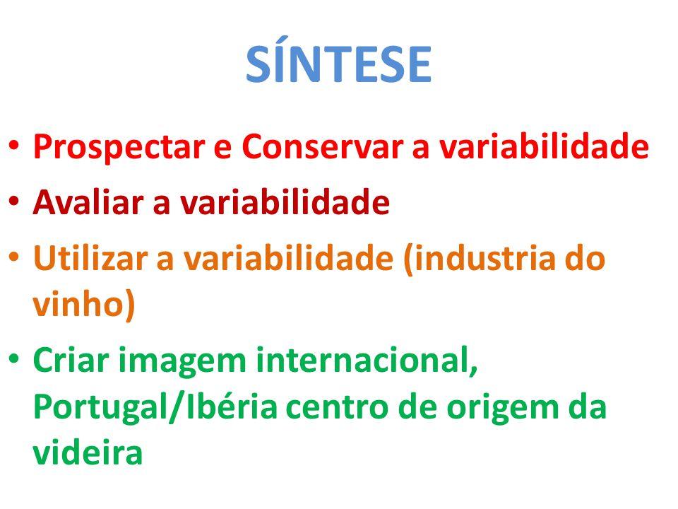 SÍNTESE • Prospectar e Conservar a variabilidade • Avaliar a variabilidade • Utilizar a variabilidade (industria do vinho) • Criar imagem internacional, Portugal/Ibéria centro de origem da videira
