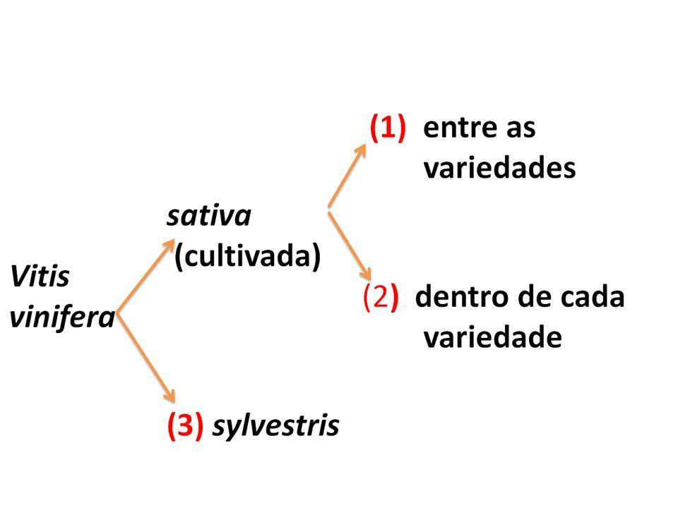 ASSOCIAÇÃO (sede do conhecimento e de decisão) Prospecção da variabilidade através de projectos Pólo Experimental Central para guarda, avaliação e utilização da variabilidade ASSOCIAÇÃO (sede do conhecimento e de decisão) Prospecção da variabilidade através de projectos Pólo Experimental Central para guarda, avaliação e utilização da variabilidade