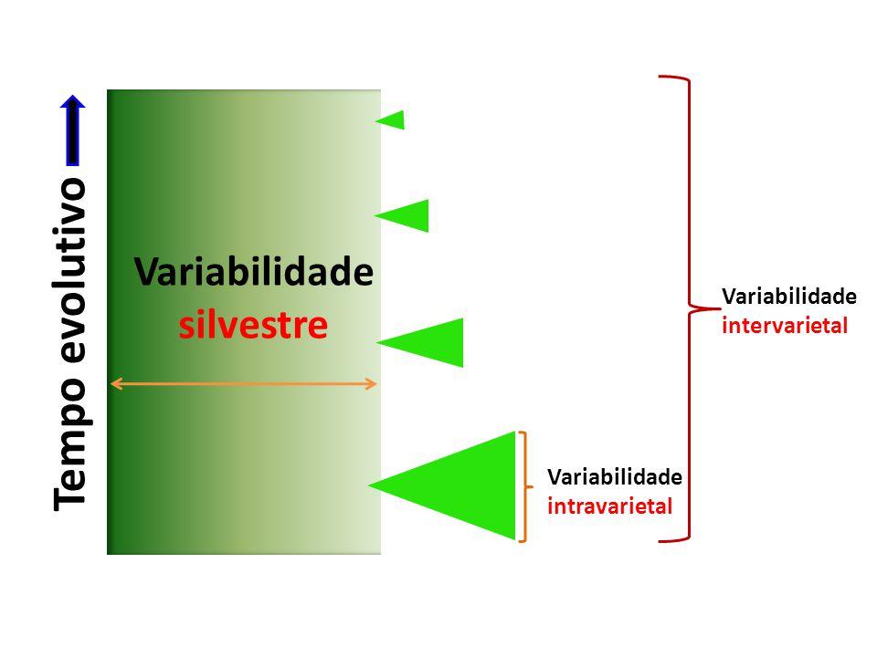 Tempo evolutivo Variabilidade silvestre Variabilidade intravarietal Variabilidade intervarietal