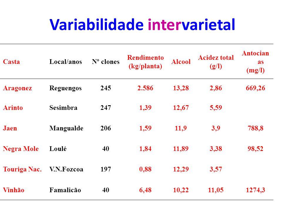 Variabilidade intervarietal CastaLocal/anosNº clones Rendimento (kg/planta) Alcool Acidez total (g/l) Antocian as (mg/l) AragonezReguengos2452.58613,282,86669,26 ArintoSesimbra2471,3912,675,59 JaenMangualde2061,5911,93,9788,8 Negra MoleLoulé401,8411,893,3898,52 Touriga Nac.V.N.Fozcoa1970,8812,293,57 VinhãoFamalicão406,4810,2211,051274,3