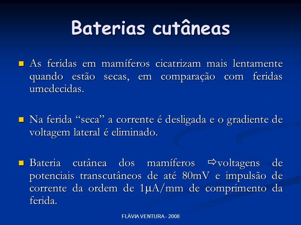 FLÁVIA VENTURA - 2008 Baterias cutâneas  As feridas em mamíferos cicatrizam mais lentamente quando estão secas, em comparação com feridas umedecidas.