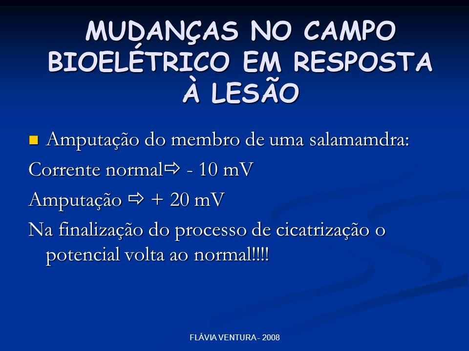 FLÁVIA VENTURA - 2008 MUDANÇAS NO CAMPO BIOELÉTRICO EM RESPOSTA À LESÃO  Amputação do membro de uma salamamdra: Corrente normal  - 10 mV Amputação 
