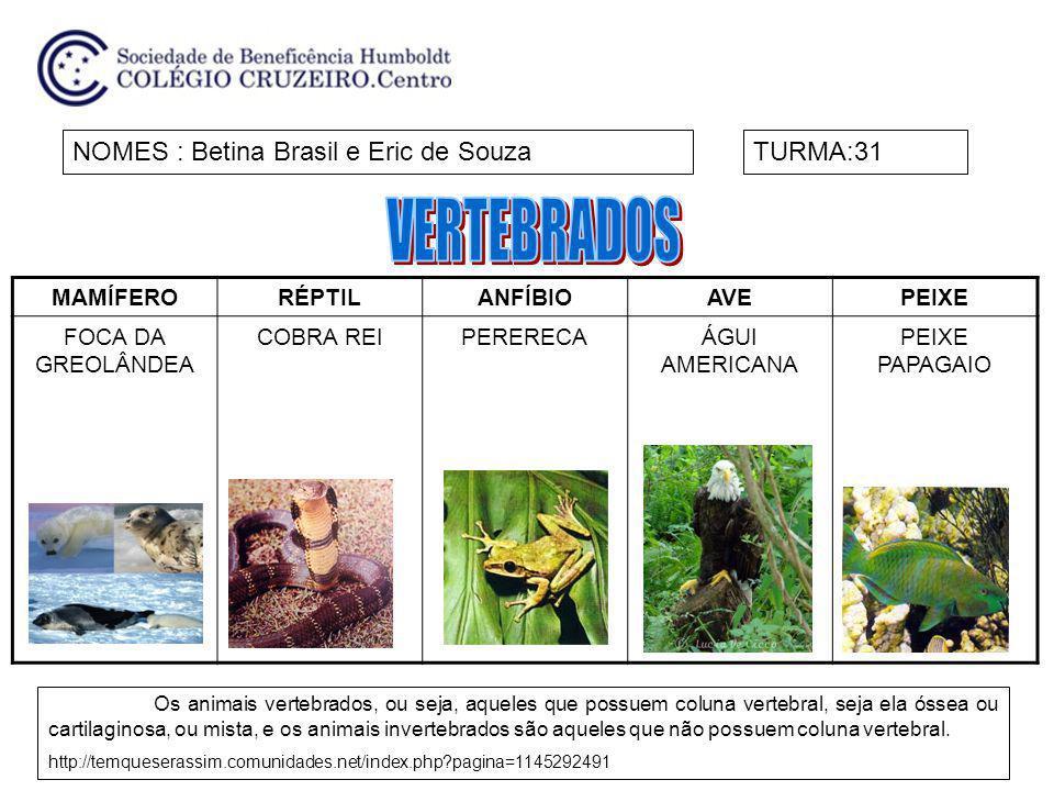 MAMÍFERORÉPTILANFÍBIOAVEPEIXE FOCA DA GREOLÂNDEA COBRA REIPERERECAÁGUI AMERICANA PEIXE PAPAGAIO NOMES : Betina Brasil e Eric de SouzaTURMA:31 Os anima