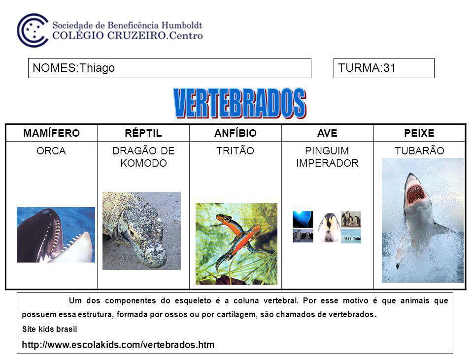 MAMÍFERORÉPTILANFÍBIOAVEPEIXE ORCADRAGÃO DE KOMODO TRITÃOPINGUIM IMPERADOR TUBARÃO NOMES:ThiagoTURMA:31 Um dos componentes do esqueleto é a coluna ver