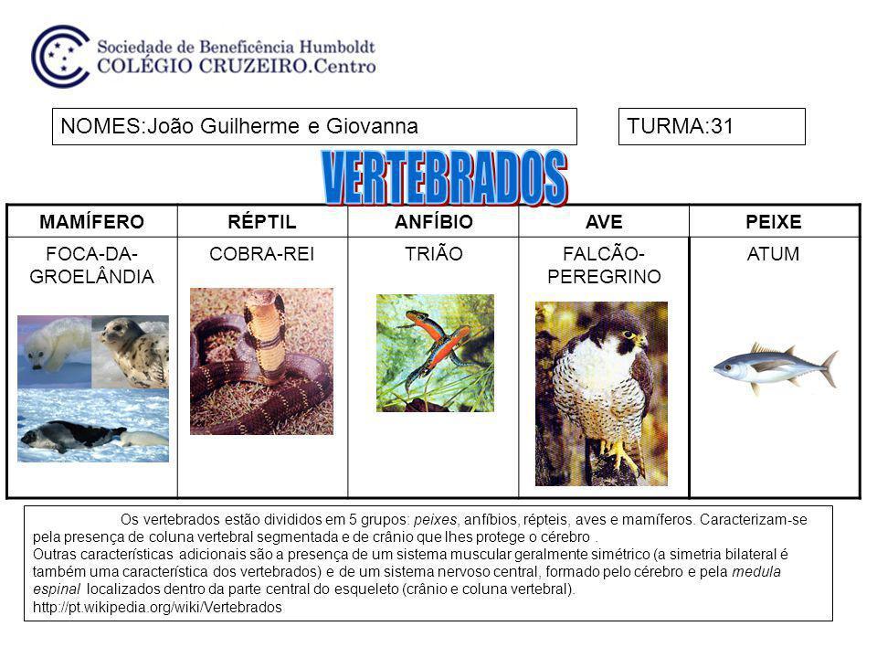 MAMÍFERORÉPTILANFÍBIOAVEPEIXE FOCA-DA- GROELÂNDIA COBRA-REITRIÃOFALCÃO- PEREGRINO ATUM NOMES:João Guilherme e GiovannaTURMA:31 Os vertebrados estão di