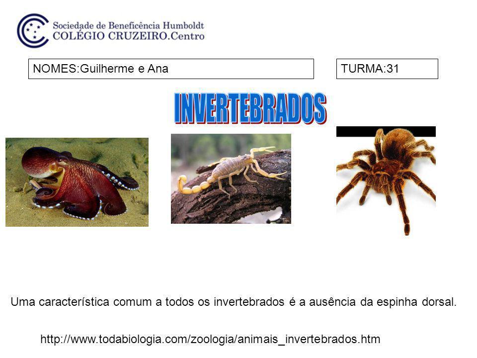 NOMES:Guilherme e AnaTURMA:31 Uma característica comum a todos os invertebrados é a ausência da espinha dorsal. http://www.todabiologia.com/zoologia/a