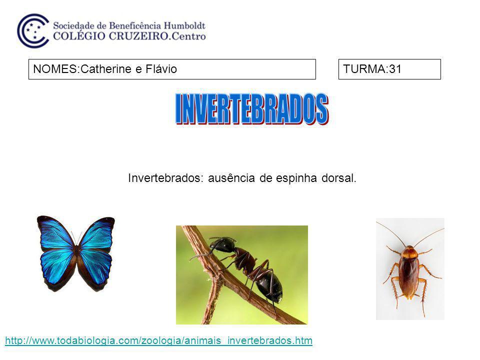 NOMES:Catherine e FlávioTURMA:31 Invertebrados: ausência de espinha dorsal. http://www.todabiologia.com/zoologia/animais_invertebrados.htm