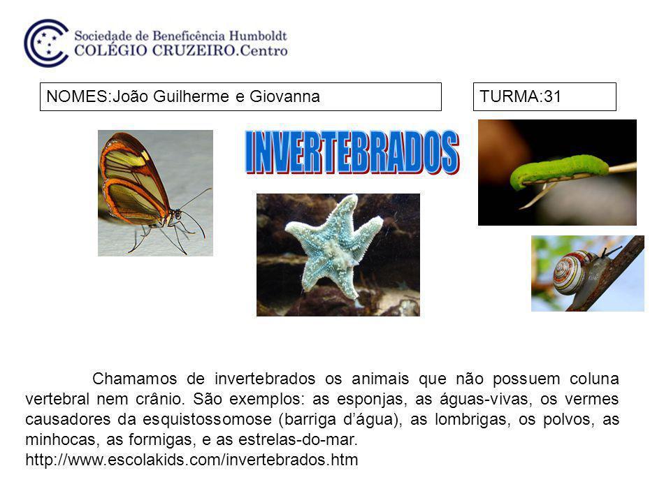NOMES:João Guilherme e GiovannaTURMA:31 Chamamos de invertebrados os animais que não possuem coluna vertebral nem crânio. São exemplos: as esponjas, a