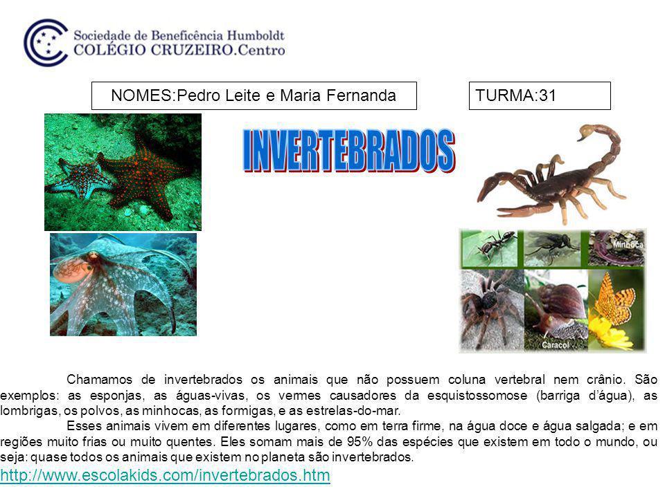 NOMES:Pedro Leite e Maria FernandaTURMA:31 Chamamos de invertebrados os animais que não possuem coluna vertebral nem crânio. São exemplos: as esponjas