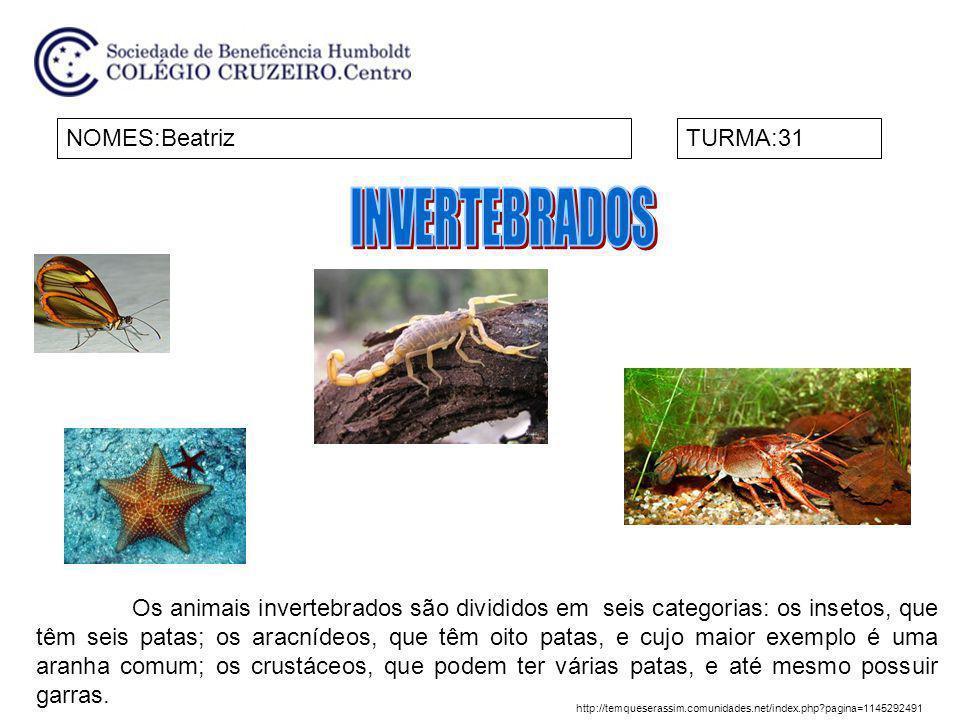 NOMES:BeatrizTURMA:31 Os animais invertebrados são divididos em seis categorias: os insetos, que têm seis patas; os aracnídeos, que têm oito patas, e