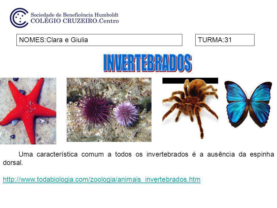 NOMES:Clara e GiuliaTURMA:31 Uma característica comum a todos os invertebrados é a ausência da espinha dorsal. http://www.todabiologia.com/zoologia/an