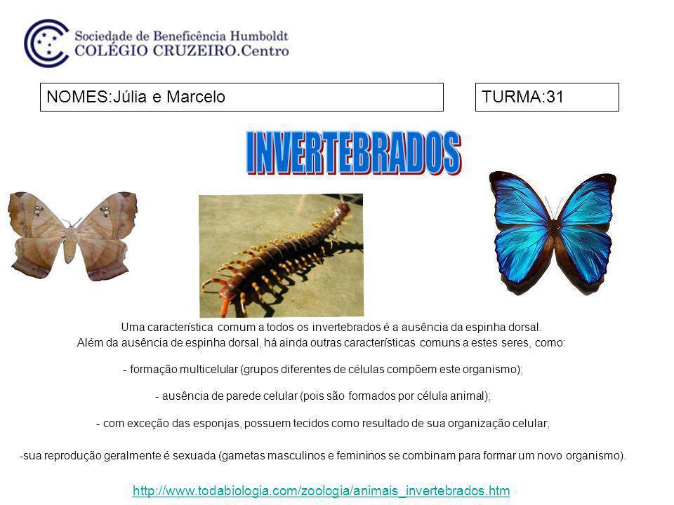 NOMES:Júlia e MarceloTURMA:31 Uma característica comum a todos os invertebrados é a ausência da espinha dorsal. Além da ausência de espinha dorsal, há