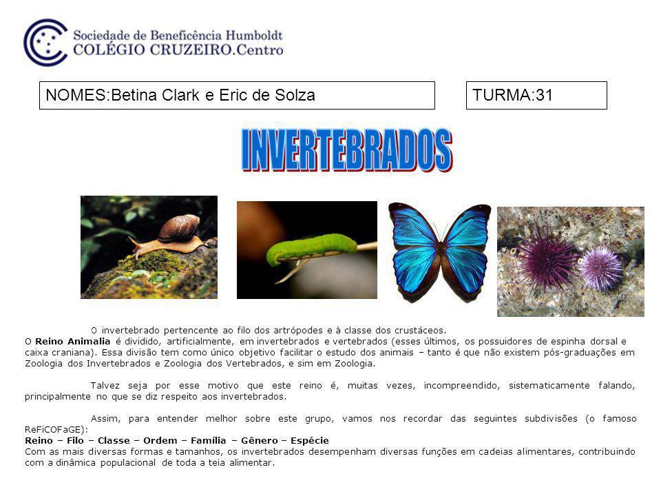 NOMES:Betina Clark e Eric de SolzaTURMA:31 O invertebrado pertencente ao filo dos artrópodes e à classe dos crustáceos. O Reino Animalia é dividido, a