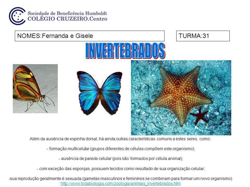 NOMES:Fernanda e GiseleTURMA:31 Além da ausência de espinha dorsal, há ainda outras características comuns a estes seres, como: - formação multicelula
