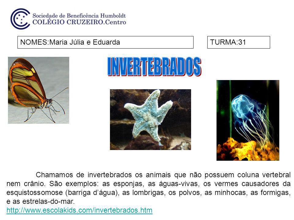 NOMES:Maria Júlia e EduardaTURMA:31 Chamamos de invertebrados os animais que não possuem coluna vertebral nem crânio. São exemplos: as esponjas, as ág