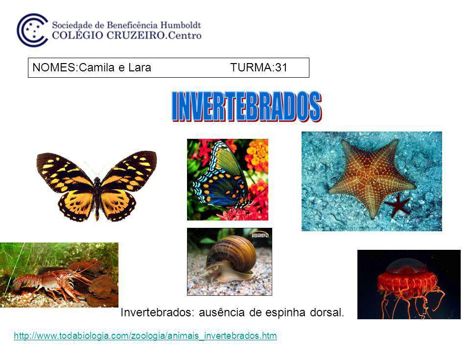 NOMES:Camila e Lara TURMA:31 Invertebrados: ausência de espinha dorsal. http://www.todabiologia.com/zoologia/animais_invertebrados.htm