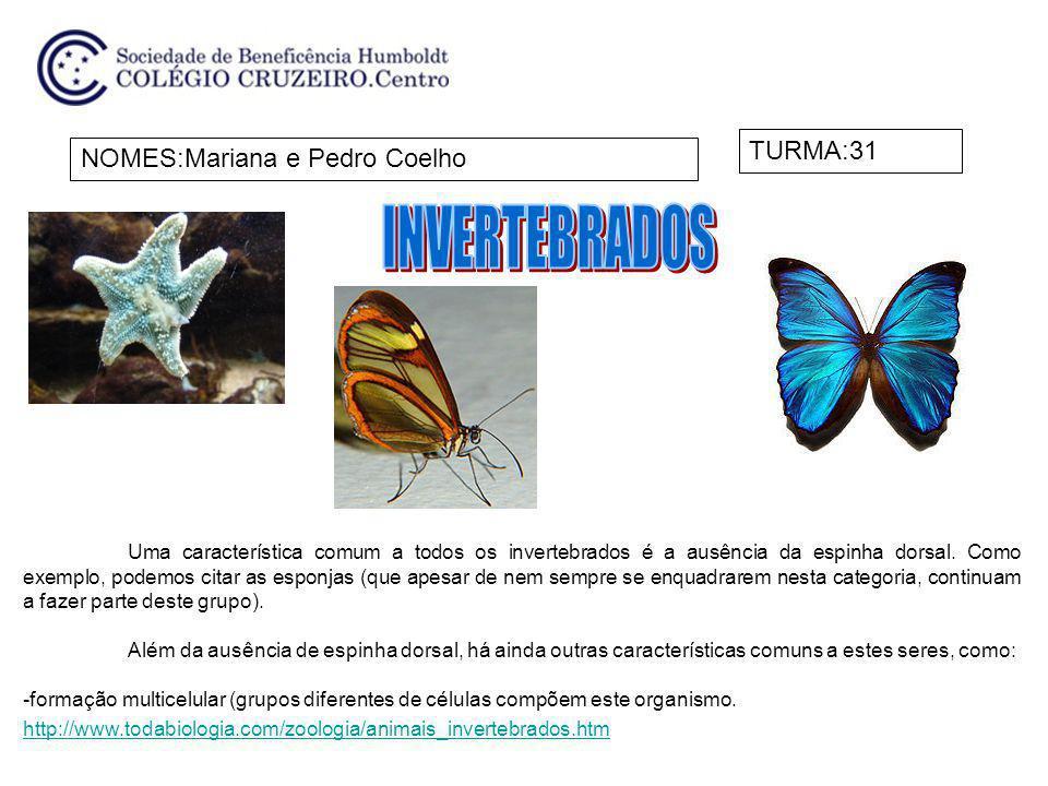 NOMES:Mariana e Pedro Coelho TURMA:31 Uma característica comum a todos os invertebrados é a ausência da espinha dorsal. Como exemplo, podemos citar as
