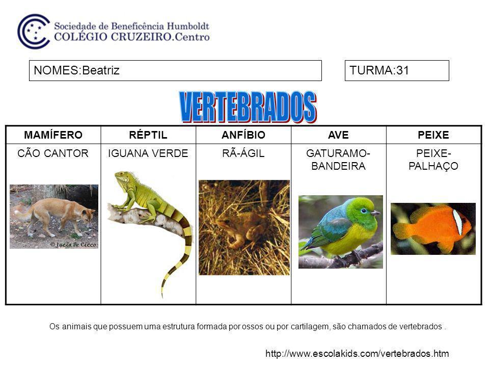 MAMÍFERORÉPTILANFÍBIOAVEPEIXE CÃO CANTORIGUANA VERDERÃ-ÁGILGATURAMO- BANDEIRA PEIXE- PALHAÇO NOMES:BeatrizTURMA:31 Os animais que possuem uma estrutur