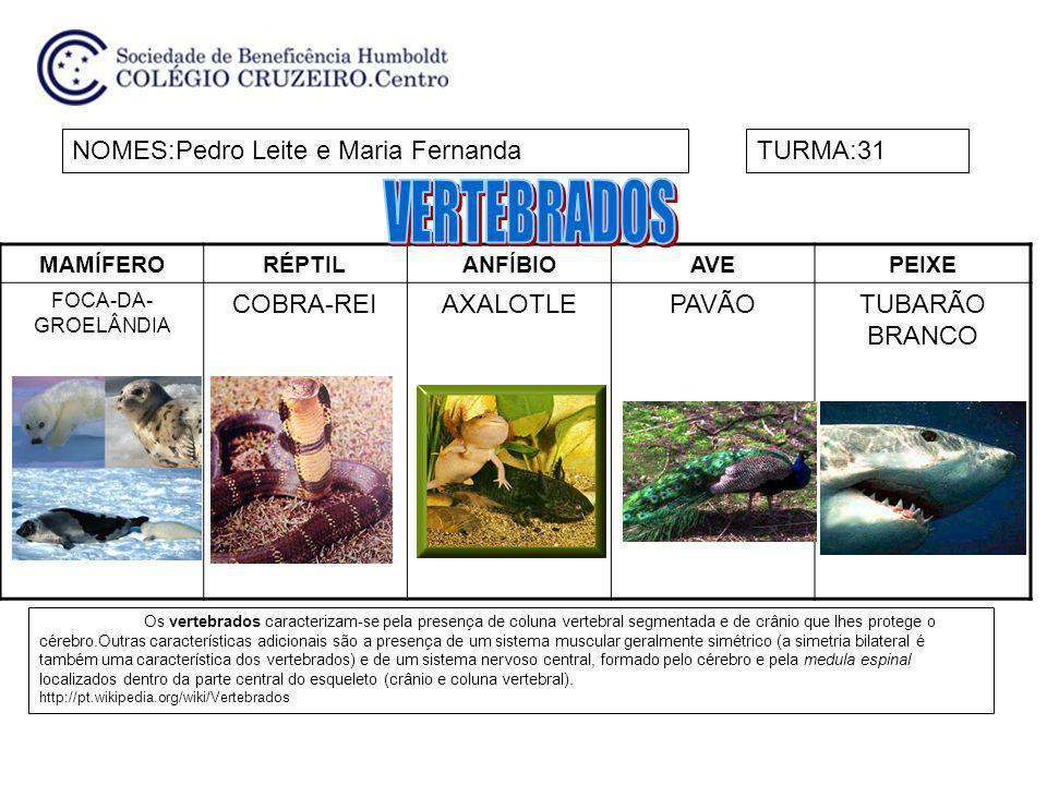 MAMÍFERORÉPTILANFÍBIOAVEPEIXE FOCA-DA- GROELÂNDIA COBRA-REIAXALOTLEPAVÃOTUBARÃO BRANCO NOMES:Pedro Leite e Maria FernandaTURMA:31 Os vertebrados carac