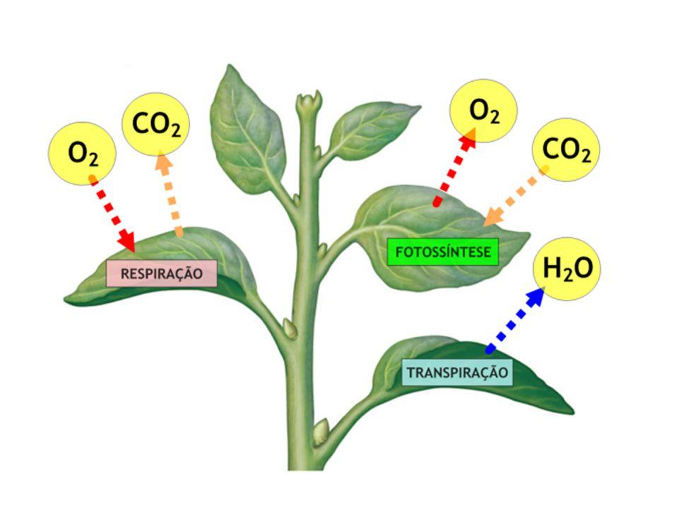 Fatores que alteram a transpiração