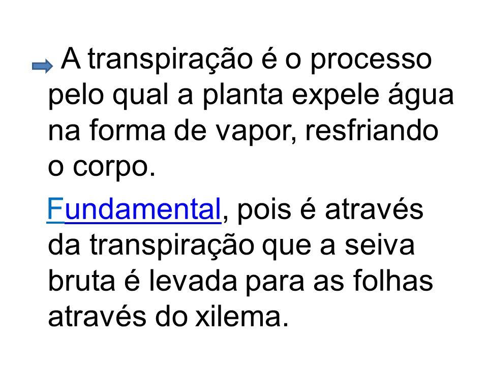 A transpiração é o processo pelo qual a planta expele água na forma de vapor, resfriando o corpo. Fundamental, pois é através da transpiração que a se