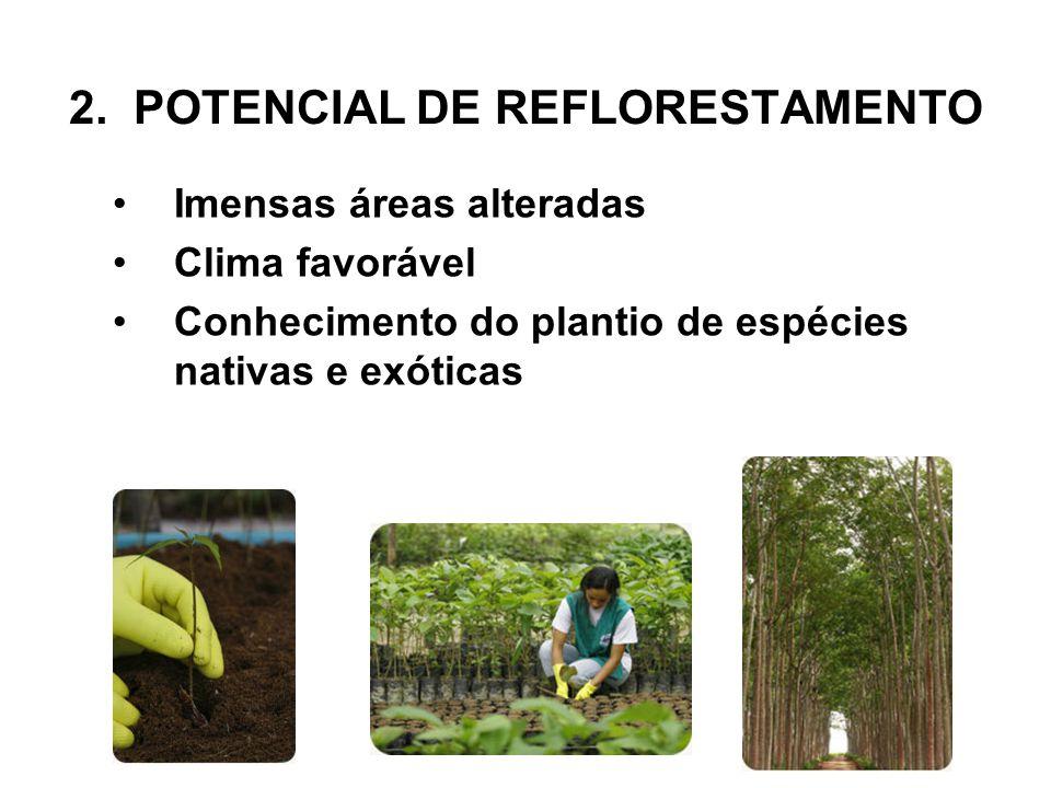 2. POTENCIAL DE REFLORESTAMENTO •Imensas áreas alteradas •Clima favorável •Conhecimento do plantio de espécies nativas e exóticas