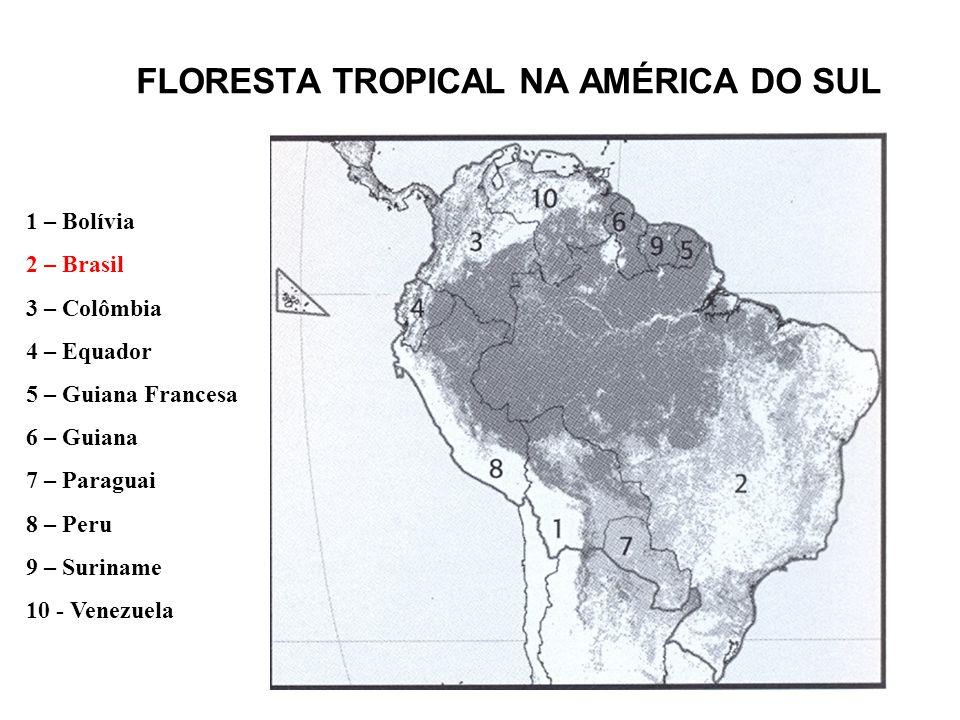 FLORESTA TROPICAL NA AMÉRICA DO SUL 1 – Bolívia 2 – Brasil 3 – Colômbia 4 – Equador 5 – Guiana Francesa 6 – Guiana 7 – Paraguai 8 – Peru 9 – Suriname