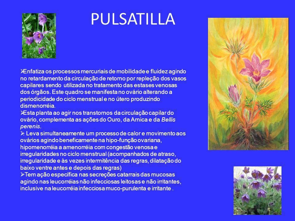 Achillea millefolium Essa planta exerce ação terapêutica no sistema circulatório, agindo beneficamente nas hemorragias.