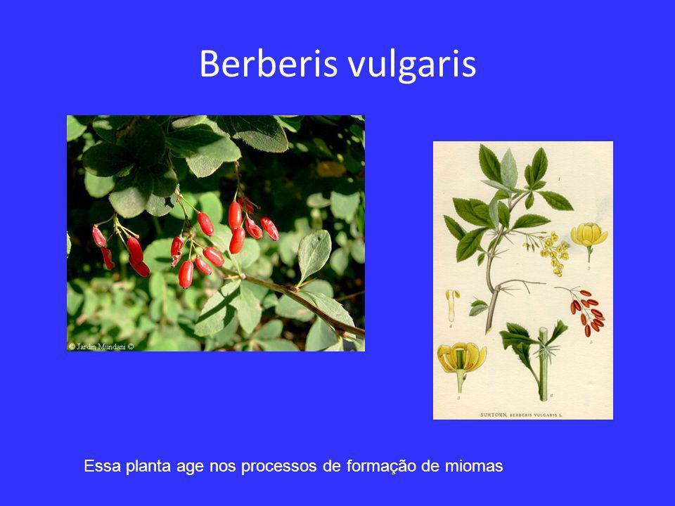 Capsella bursa pastoris Essa planta da família das Crucíferas, da qual fazem parte a mostarda e o rabanete, age no sentido de levar um processo de calor à região uro-genital.