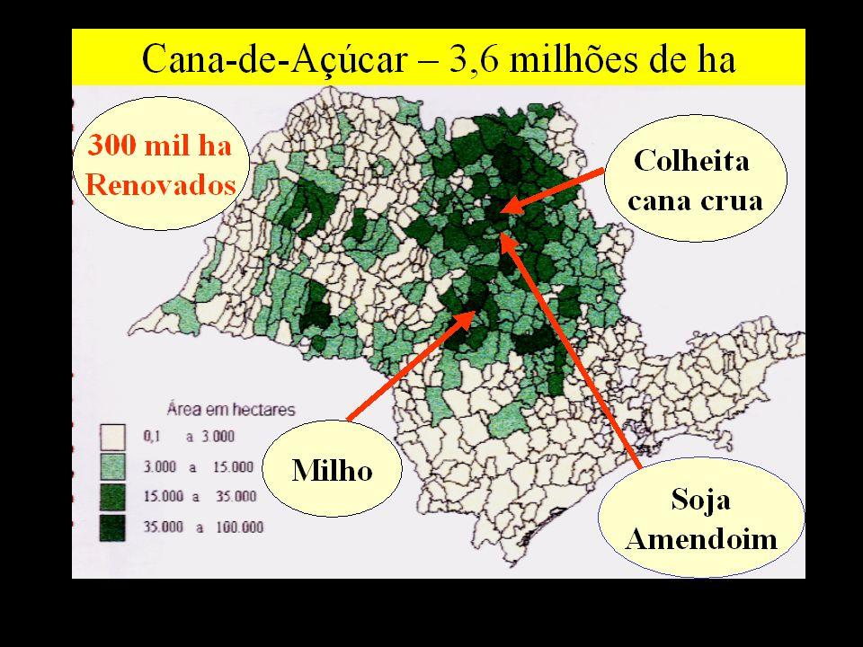 Evolução Área de Colheita Mecanizada e Crua no Brasil Fonte : Nunes Junior citado por Ripoli & Ripoli (2004) Eliminação Gradativa das Queimadas Potencial Centro-Sul : 70% das áreas Lei n.