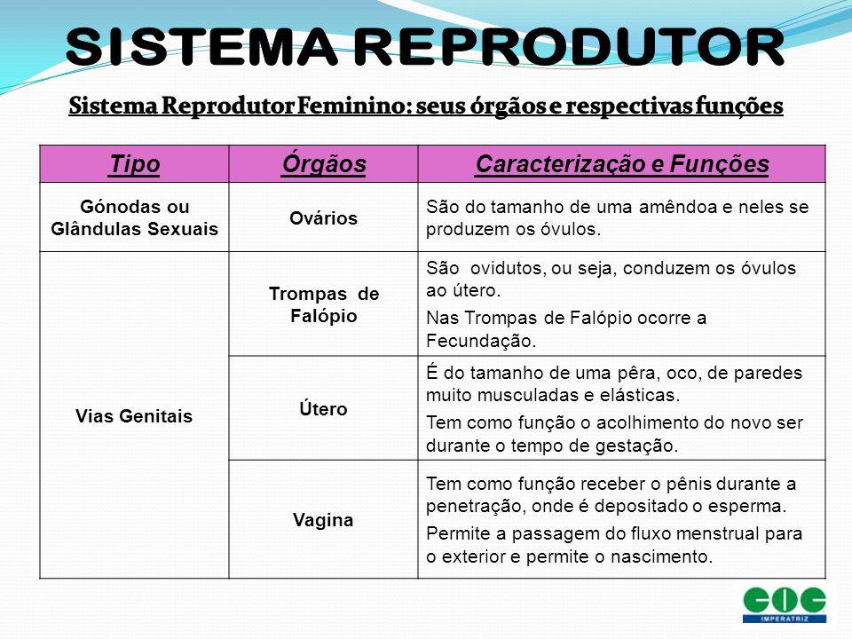 TipoÓrgãosCaracterização e Funções Gónodas ou Glândulas Sexuais Ovários São do tamanho de uma amêndoa e neles se produzem os óvulos. Vias Genitais Tro