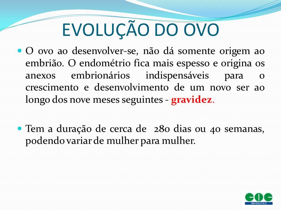 EVOLUÇÃO DO OVO  O ovo ao desenvolver-se, não dá somente origem ao embrião. O endométrio fica mais espesso e origina os anexos embrionários indispens
