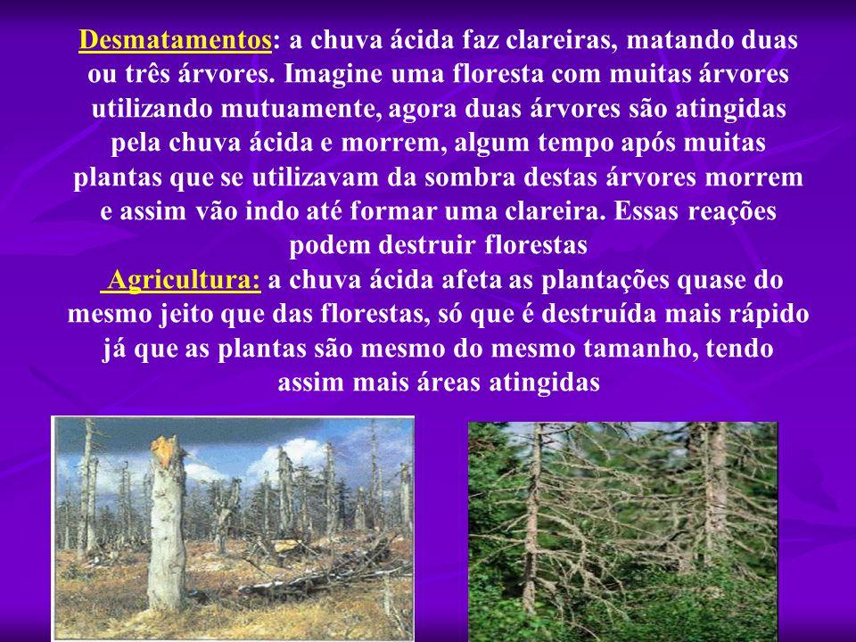 Desmatamentos: a chuva ácida faz clareiras, matando duas ou três árvores. Imagine uma floresta com muitas árvores utilizando mutuamente, agora duas ár