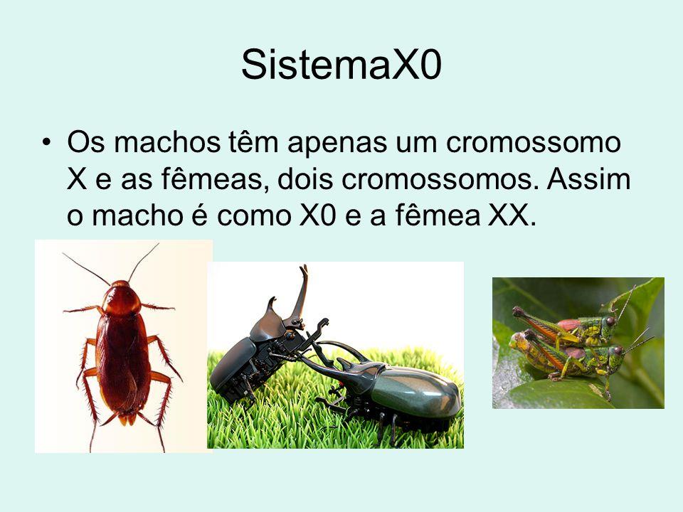 SistemaX0 •Os machos têm apenas um cromossomo X e as fêmeas, dois cromossomos. Assim o macho é como X0 e a fêmea XX.