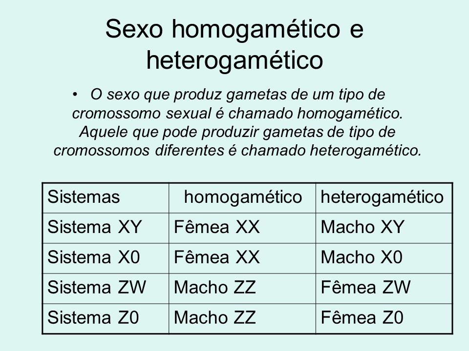 Sexo homogamético e heterogamético •O sexo que produz gametas de um tipo de cromossomo sexual é chamado homogamético. Aquele que pode produzir gametas