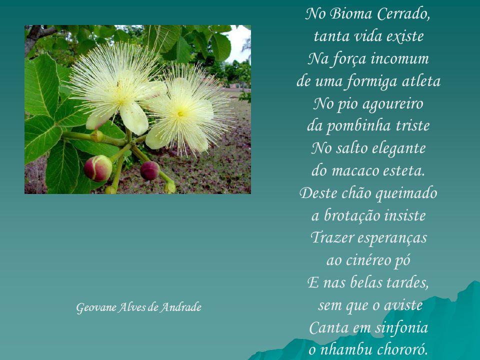 No Bioma Cerrado, tanta vida existe Na força incomum de uma formiga atleta No pio agoureiro da pombinha triste No salto elegante do macaco esteta. Des