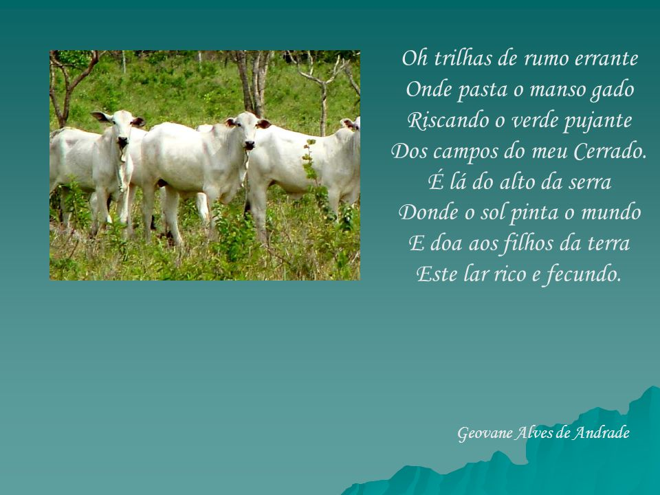 Oh trilhas de rumo errante Onde pasta o manso gado Riscando o verde pujante Dos campos do meu Cerrado. É lá do alto da serra Donde o sol pinta o mundo