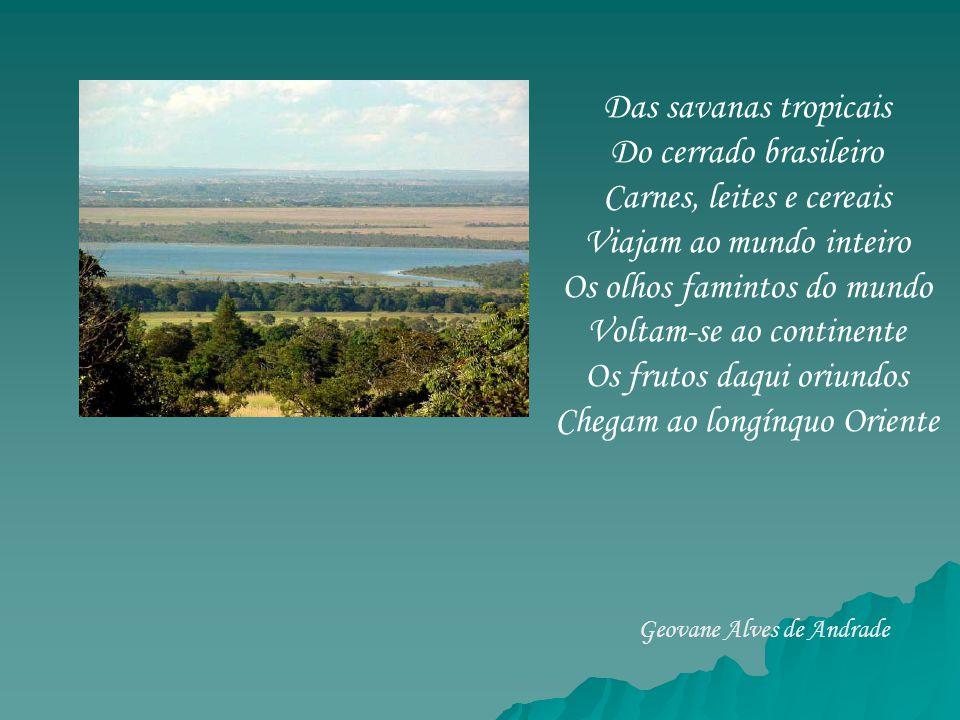 Das savanas tropicais Do cerrado brasileiro Carnes, leites e cereais Viajam ao mundo inteiro Os olhos famintos do mundo Voltam-se ao continente Os fru