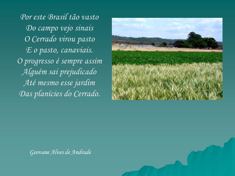 Por este Brasil tão vasto Do campo vejo sinais O Cerrado virou pasto E o pasto, canaviais. O progresso é sempre assim Alguém sai prejudicado Até mesmo