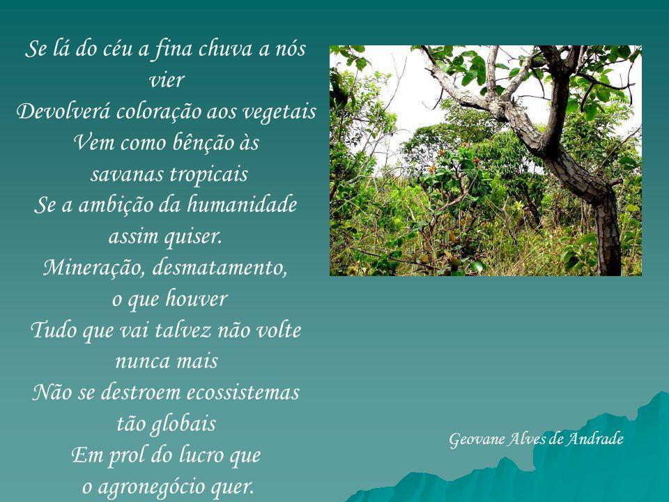 Se lá do céu a fina chuva a nós vier Devolverá coloração aos vegetais Vem como bênção às savanas tropicais Se a ambição da humanidade assim quiser. Mi