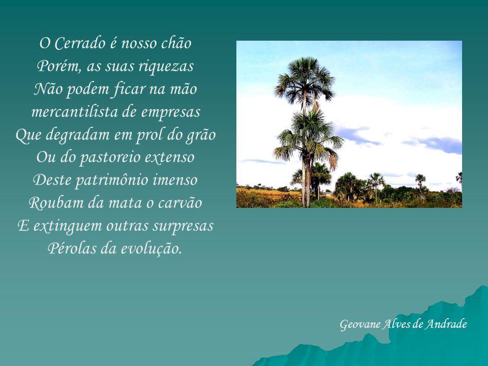 O Cerrado é nosso chão Porém, as suas riquezas Não podem ficar na mão mercantilista de empresas Que degradam em prol do grão Ou do pastoreio extenso D