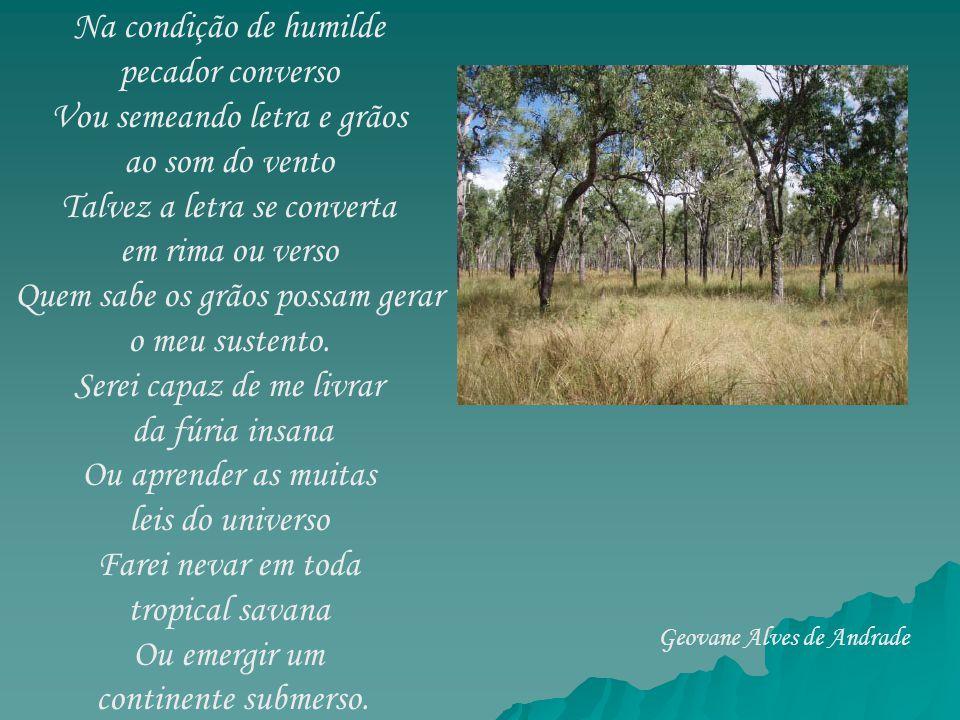 Oh trilhas de rumo errante Onde pasta o manso gado Riscando o verde pujante Dos campos do meu Cerrado.