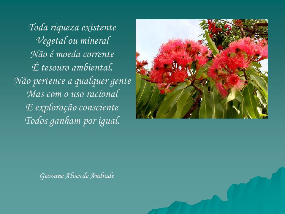 Toda riqueza existente Vegetal ou mineral Não é moeda corrente É tesouro ambiental. Não pertence a qualquer gente Mas com o uso racional E exploração