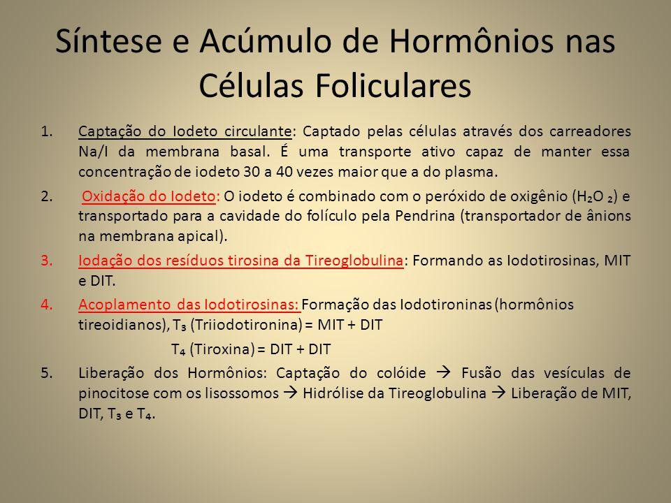 Síntese e Acúmulo de Hormônios nas Células Foliculares 1.Captação do Iodeto circulante: Captado pelas células através dos carreadores Na/I da membrana basal.