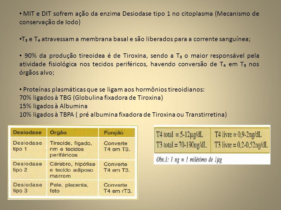 • MIT e DIT sofrem ação da enzima Desiodase tipo 1 no citoplasma (Mecanismo de conservação de Iodo) • T₃ e T₄ atravessam a membrana basal e são liberados para a corrente sanguínea; • 90% da produção tireoidea é de Tiroxina, sendo a T₃ o maior responsável pela atividade fisiológica nos tecidos periféricos, havendo conversão de T₄ em T₃ nos órgãos alvo; • Proteínas plasmáticas que se ligam aos hormônios tireoidianos: 70% ligados à TBG (Globulina fixadora de Tiroxina) 15% ligados à Albumina 10% ligados à TBPA ( pré albumina fixadora de Tiroxina ou Transtirretina)