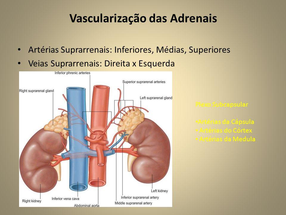 Vascularização das Adrenais • Artérias Suprarrenais: Inferiores, Médias, Superiores • Veias Suprarrenais: Direita x Esquerda Plexo Subcapsular • Artérias da Cápsula • Artérias do Córtex • Artérias da Medula