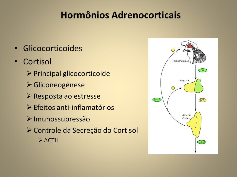 • Glicocorticoides • Cortisol  Principal glicocorticoide  Gliconeogênese  Resposta ao estresse  Efeitos anti-inflamatórios  Imunossupressão  Controle da Secreção do Cortisol  ACTH Hormônios Adrenocorticais