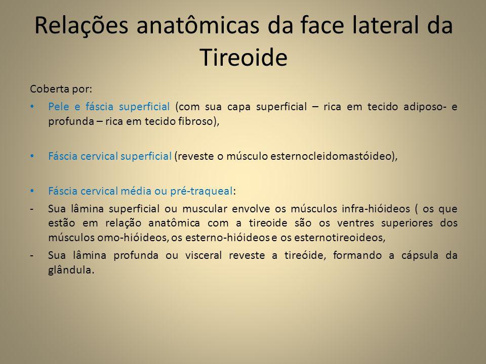 Relações anatômicas da face lateral da Tireoide Coberta por: • Pele e fáscia superficial (com sua capa superficial – rica em tecido adiposo- e profunda – rica em tecido fibroso), • Fáscia cervical superficial (reveste o músculo esternocleidomastóideo), • Fáscia cervical média ou pré-traqueal: -Sua lâmina superficial ou muscular envolve os músculos infra-hióideos ( os que estão em relação anatômica com a tireoide são os ventres superiores dos músculos omo-hióideos, os esterno-hióideos e os esternotireoideos, -Sua lâmina profunda ou visceral reveste a tireóide, formando a cápsula da glândula.